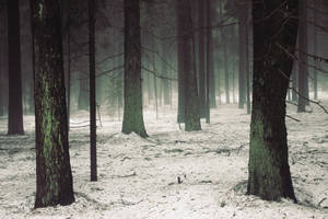Forest by Winesmoke