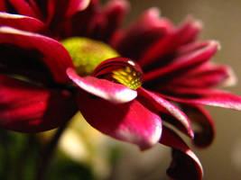 Flower + Water Drop Stock by SarahxJane-Stock