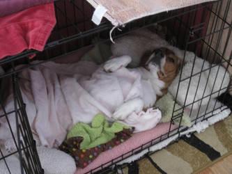 Go to Sleep Little Doggy by Earthsongfairy