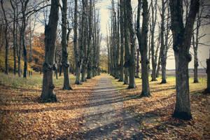 Walk of Serenity by jesp3r