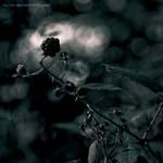 Summer's end sonata by Vic4U