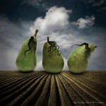 3 little pears by Vic4U