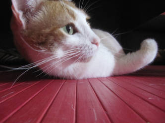 catlike by pilirocker