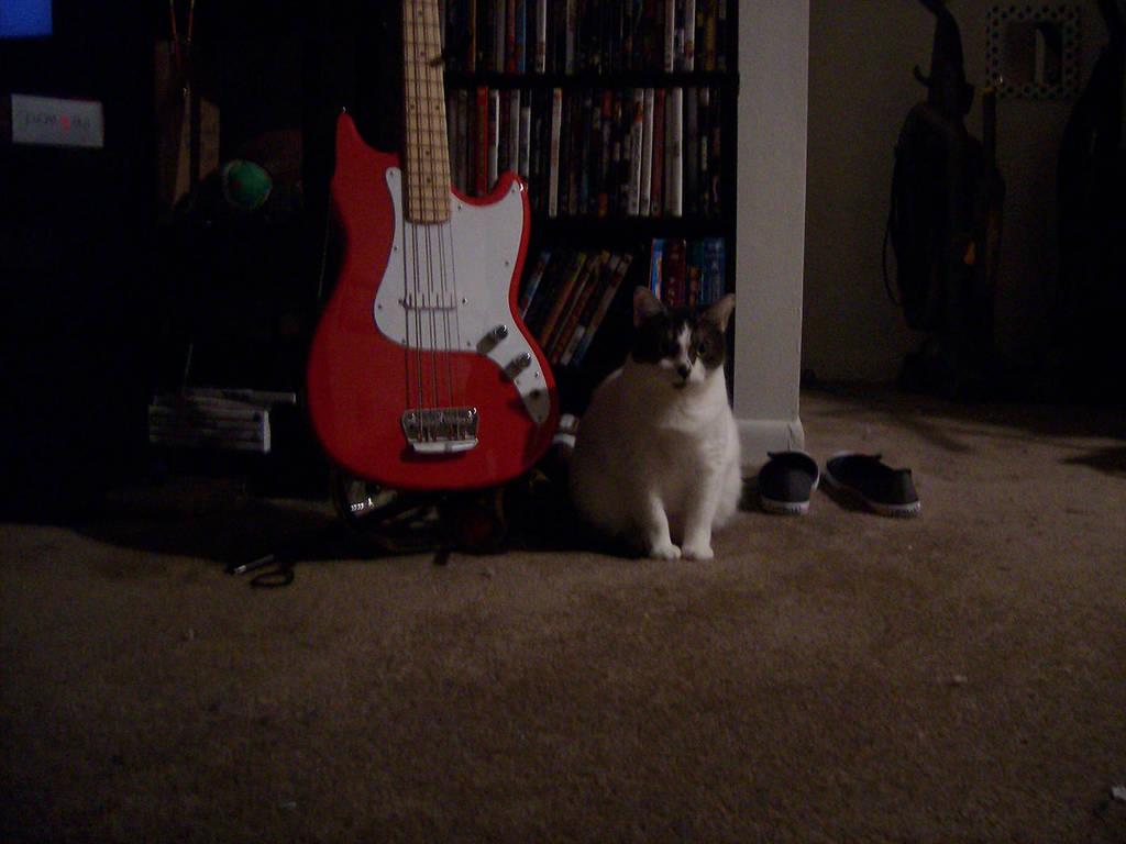 Fat Cat Bass Player By Wolfman 88 On Deviantart