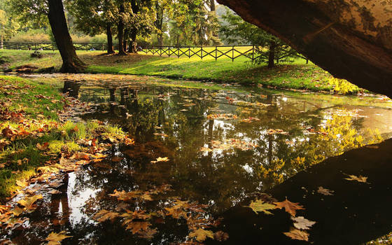Leaves over the water by nicubunu