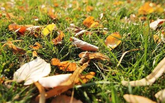 Autumn grass by nicubunu