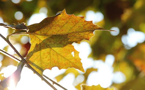 Itsy-bitsy autumn by nicubunu