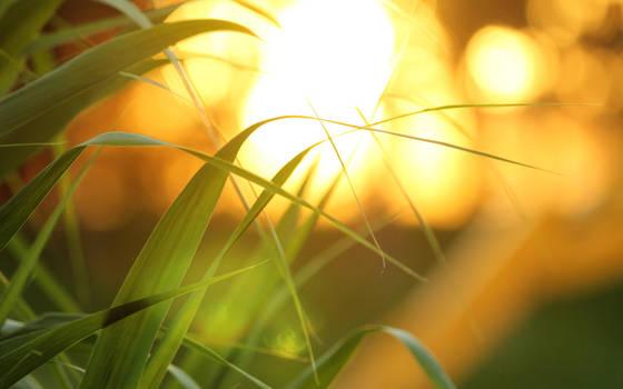 Golden light by nicubunu