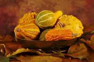 Bowl of squashes by nicubunu