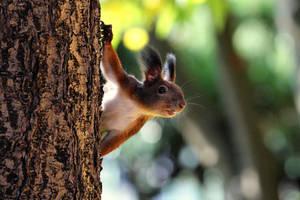 Good morning Mister Squirrel by nicubunu