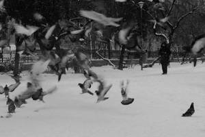Wings of winter by nicubunu