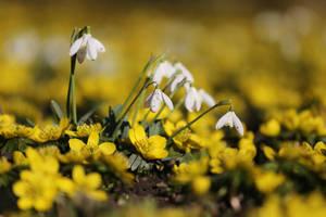 It smells like spring by nicubunu