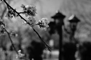 Vintage spring by nicubunu