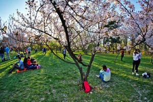 Springly by nicubunu