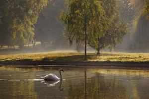 Autumn morning with swan by nicubunu