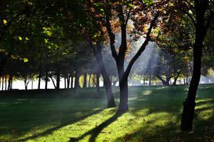 Rays by nicubunu