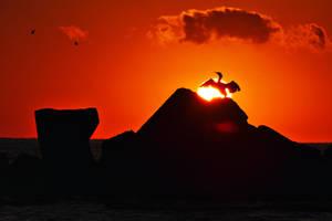Cormorant in the sun by nicubunu