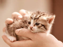 kitty by Katari01