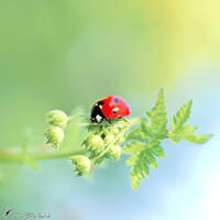 Ladybug VI by Metalfire77