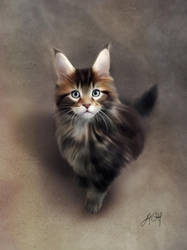 Maine Coon (Digital Drawing) by lunaroveda