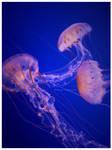 the jellies. by xXitsXnadyaXx