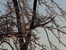 Icy Tree Stock by Toranih-stock