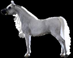 Precut Grey Arabian Gelding by Vesperity-Stock