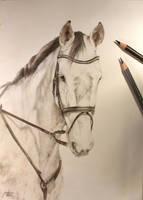 Horse portrait by hermione-baggins