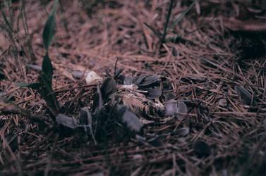 Dead Bird by Klexicon
