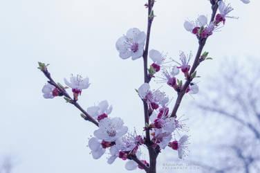 Hello Spring by VampyrEmpress