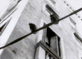 Culos de paloma veneciana... by zambra