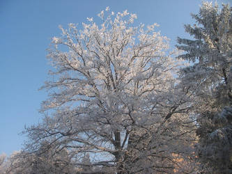 Trees in Winter 01 by Mickeye