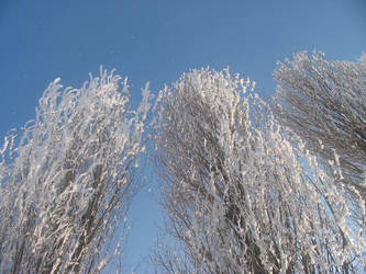 Trees in Winter 02 by Mickeye