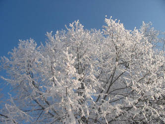 Trees in Winter 04 by Mickeye