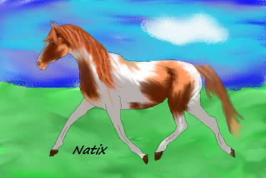Horse Drawing GIMP by natix502