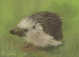 hedgie by Etomo