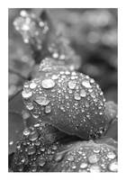 Droplets by midwinternight