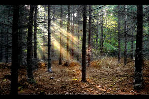 Light rays III by tomsumartin