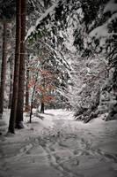 Snowy way by tomsumartin