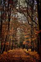 Kunraticky les by tomsumartin