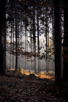 Back into the woods by tomsumartin