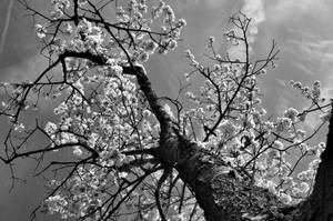 V kvetu by tomsumartin
