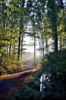 Stromy,cesta,voda by tomsumartin