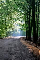 Cesta svetla by tomsumartin