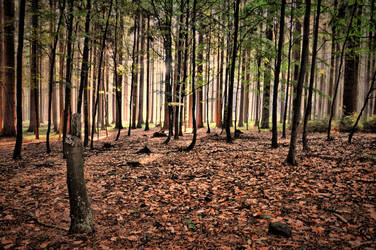 Dream of a forest by tomsumartin