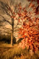 Magic of Autumn by tomsumartin
