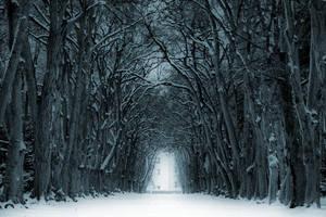 Winter trip by tomsumartin