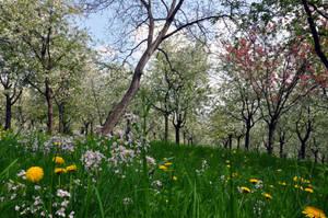 Petrinsky park II by tomsumartin