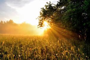 Bright sunshine by tomsumartin