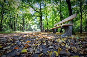 Autumn bench by tomsumartin
